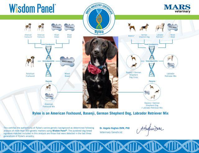 DNA Certificate