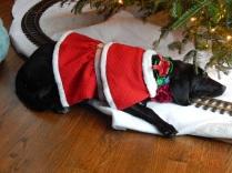 No Santa yet? Back to Sleep.
