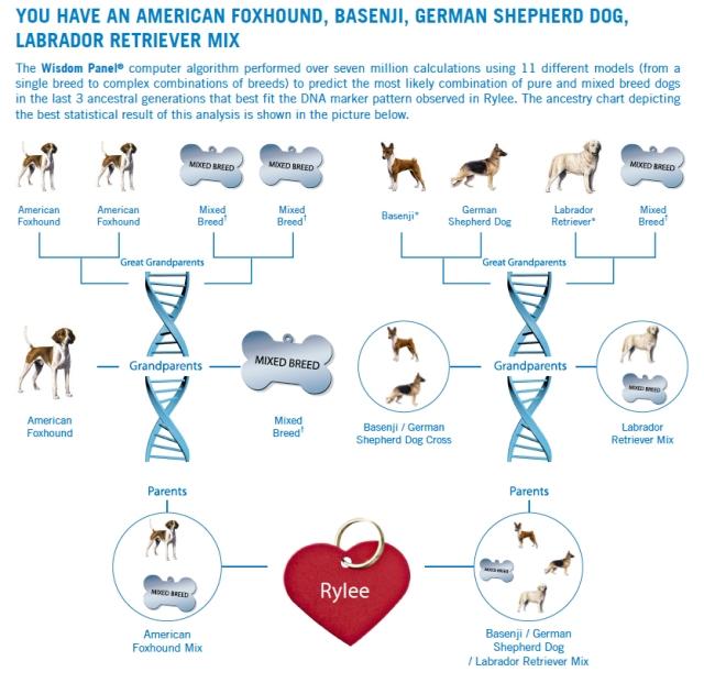 Rylee DNA 1