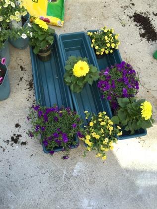 New planters, new plants!